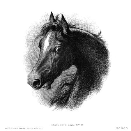 Horse Nhorses Head American Bank Note Steel Engraving C1870 Poster Print By Granger Collection