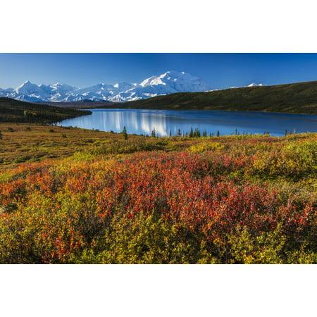 Fall colors at Wonder Lake in morning light Denali National Park & Preserve Stretched Canvas - Carl Johnson  Design Pics (19 x 12) ()