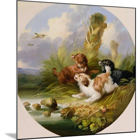 Three Spaniels Flushing Mallard Wood Mounted Print Wall Art By George Armfield