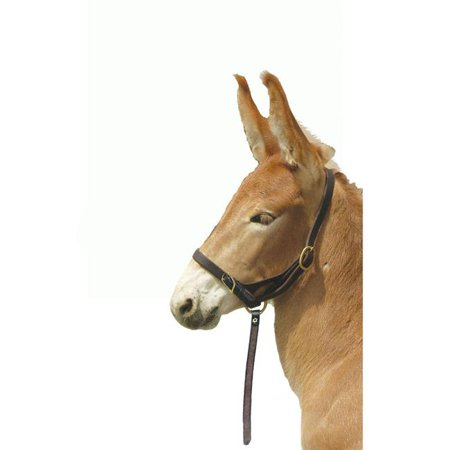 Pro-Trainer H410 Leather Foal Slip Halter with Grab Strap - image 1 of 1