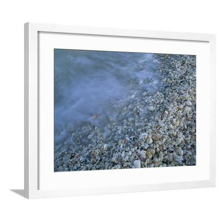 Shells at Beach, Sanibel Island, Florida Framed Print Wall Art By Rolf