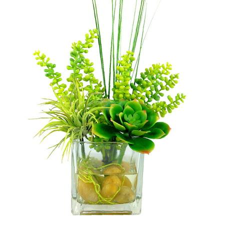 Cube Desktop Succulents Plant in Vase