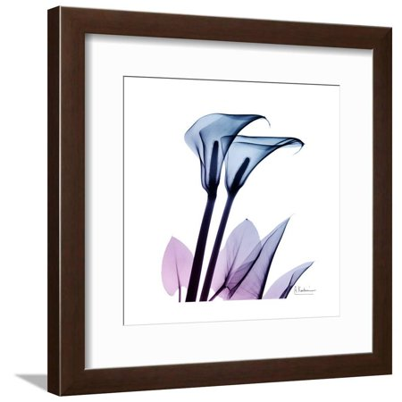 Calla Lily Purp Framed Print Wall Art By Albert Koetsier
