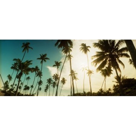 Palm Trees Along The Beach In Morro De Sao Paulo Tinhare Cairu Bahia Brazil Poster Print