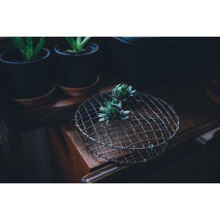Canvas Print Plant Horticulture Botanical Succulent Cacti Stretched Canvas 10 x 14