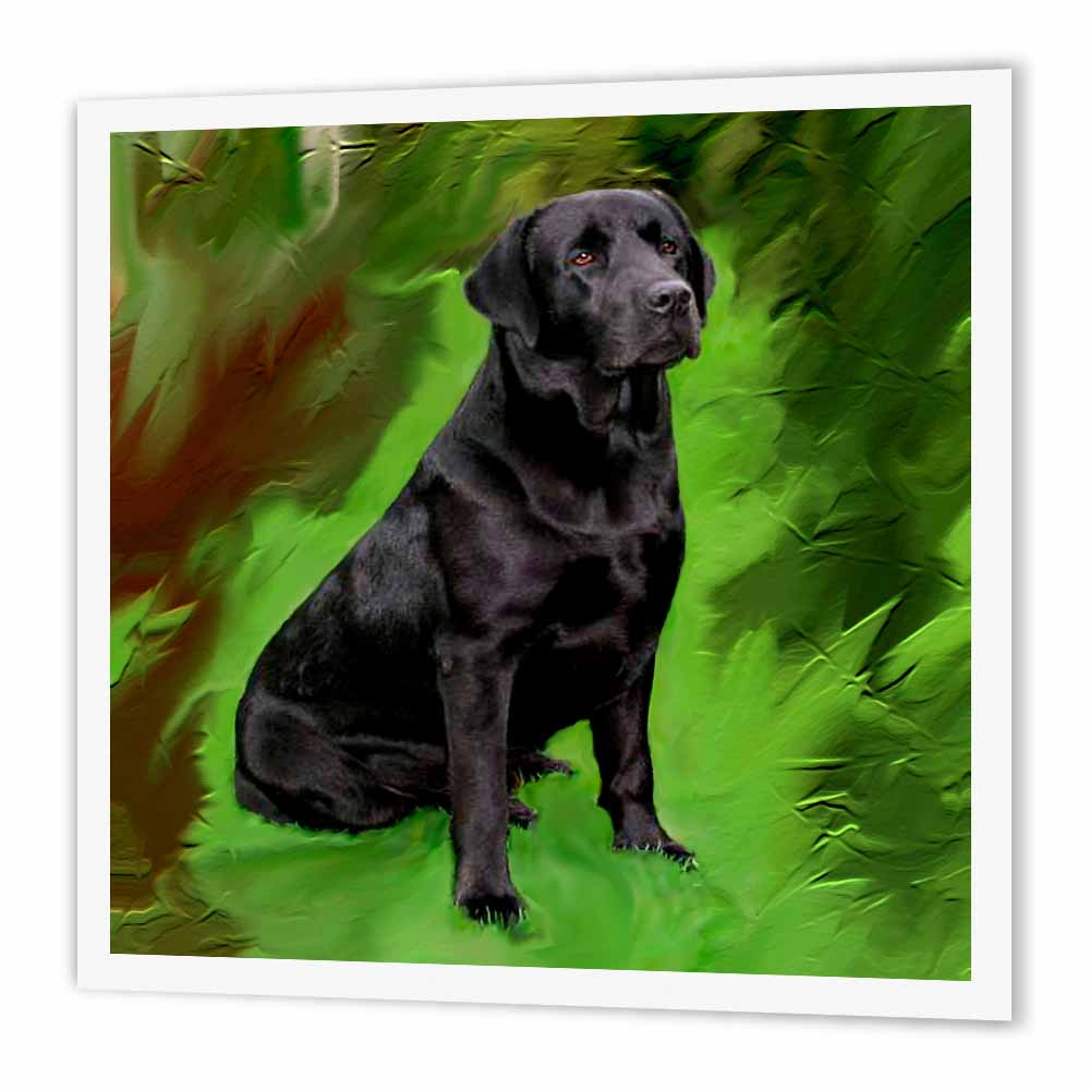 3dRose Black Labrador Retriever, Iron On Heat Transfer, 10 by 10-inch, For White Material