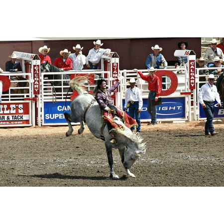 LAMINATED POSTER Stampede Activity Canada Calgary Outdoor Horses Poster Print 24 x 36 ()