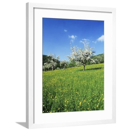 Blooming Fruit Trees on a Flower Meadow Framed Print Wall Art By Markus -