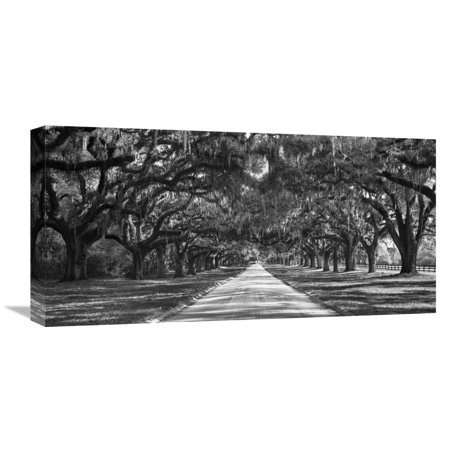 Global Gallery Anonymous,'Tree lined plantation entrance, South Carolina' Stretched Canvas Artwork