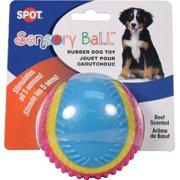 SENSORY BALL RUBBER DOG TOY