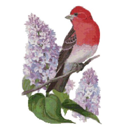 New Hampshire State Bird and Flower Purple Finch and Purple Lilac Counted Cross Stitch Pattern