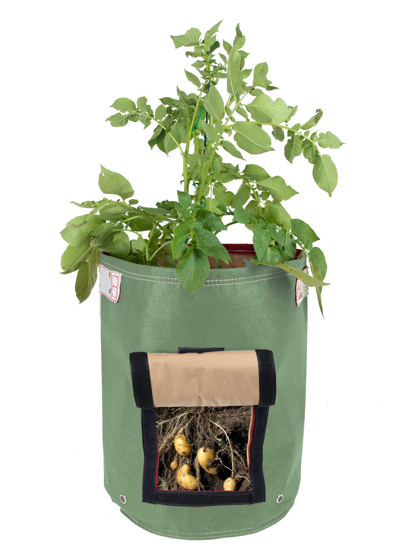 BloemBagz Potato Vegetable Planter Grow Bag 9 Gallon Living Green by Bloem