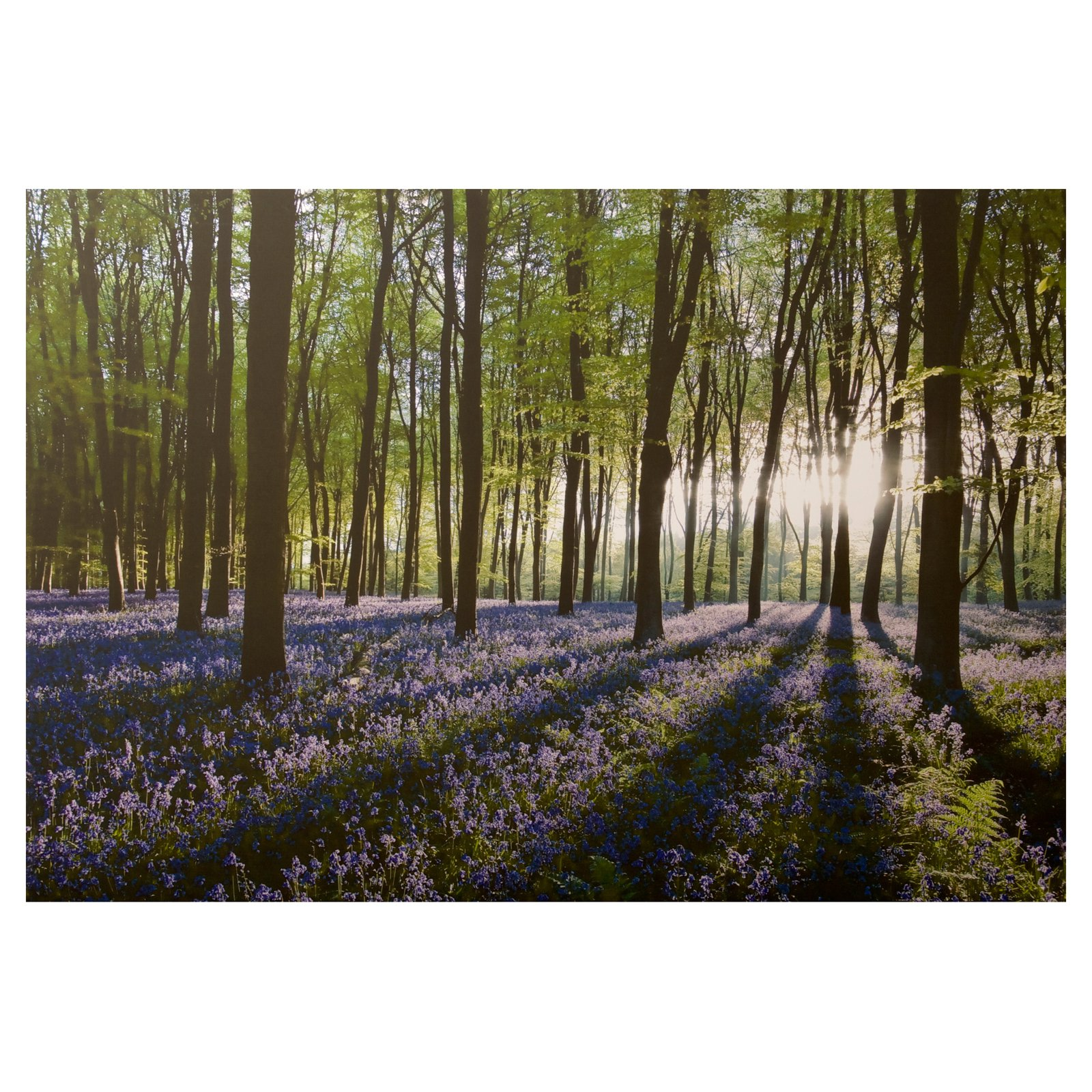 Bluebell Landscape Canvas Wall Art - 40W x 28H in.