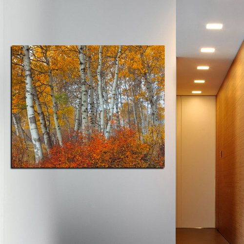 Cortesi Home Morning Aspens by Jesse Estes Photographic Print on Wrapped Canvas