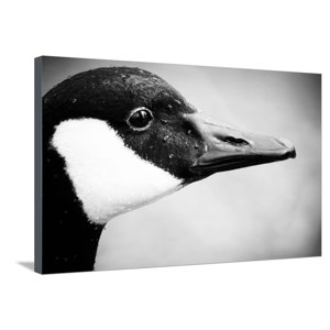 Canadian Goose II Stretched Canvas Print Wall Art By Beth Wold