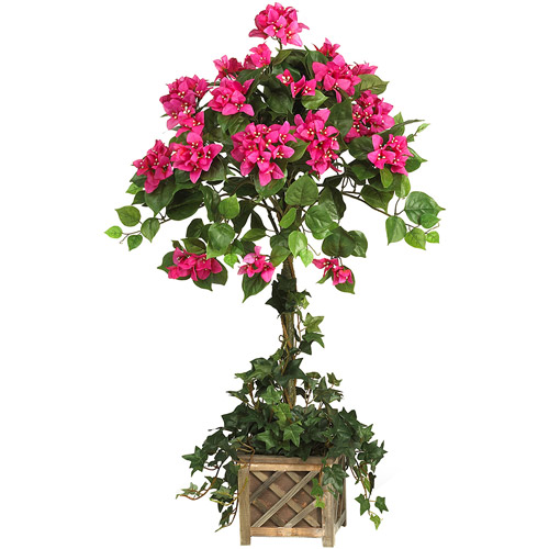 Bougainvillea Topiary with Wood Box