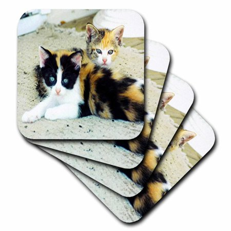 3dRose 2 Adorable Calico Kittens, Ceramic Tile Coasters, set of 4