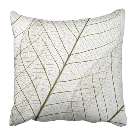 USART White Leaf Dried Rubber Tree Skeleton Leaves Macro Translucent Botanical Botany Pillow Case Cushion Cover 16x16 inch (Systems Semi)