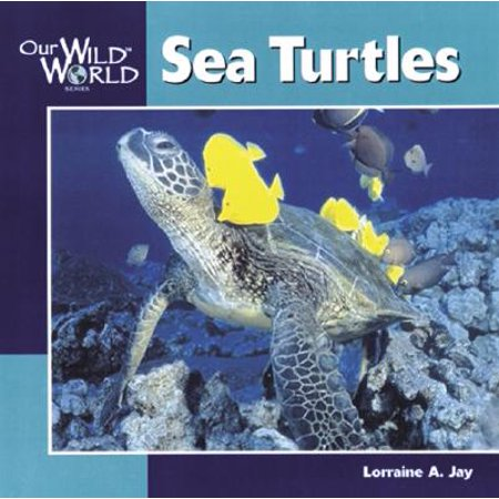 Sea Turtles (The Oldest Sea Turtle In The World)