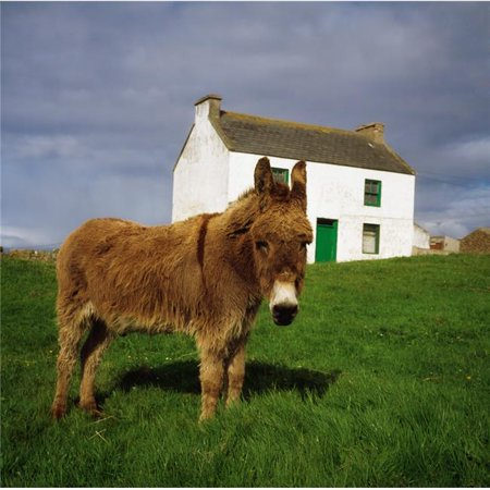 Posterazzi DPI1814865LARGE Cottage & Donkey Tory Island Poster Print by The Irish Image Collection, 24 x 24 - Large - image 1 of 1