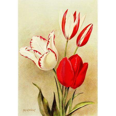Bulb Gardening 1922 Herbaceous Tulips Canvas Art - Maud Astley West (24 x (Tulip Bulb)