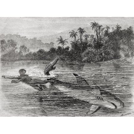 A Young Boy Kicking A Sharks Tail To Escape Its Attack In 19Th Century Colombia From El Mundo En La Mano Published 1875 PosterPrint](Its A Boy Cigars)