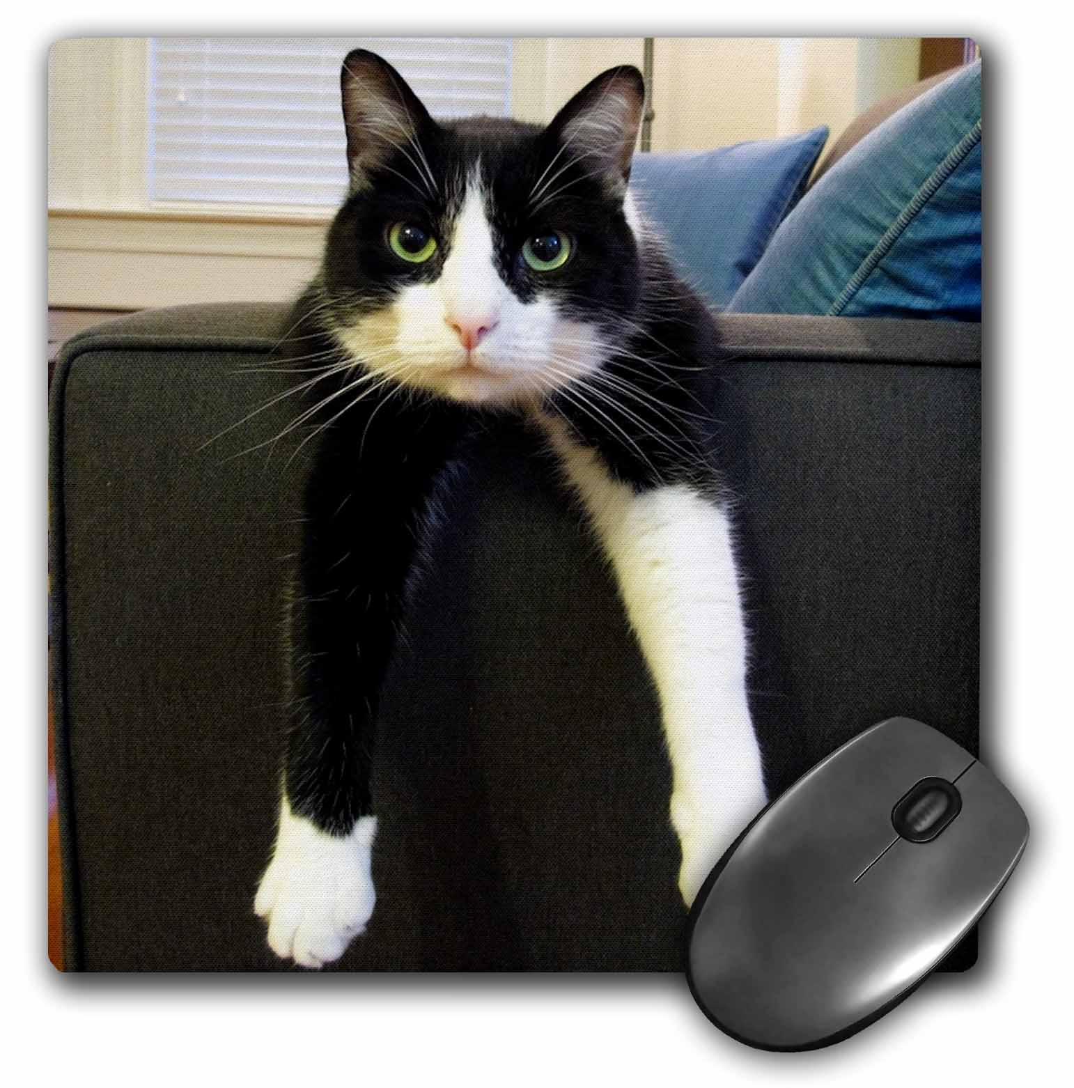 3dRose Black and White Cat with Nothing to Do, Mouse Pad, 8 by 8 inches by 3dRose