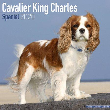 Cavalier King Charles Calendar 2020 - Cavalier King Charles Dog Breed Calendar - Cavalier King Charless Premium Wall Calendar 2020