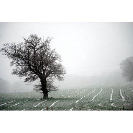 Norfolk field with single tree Print Wall Art By Angela Marsh