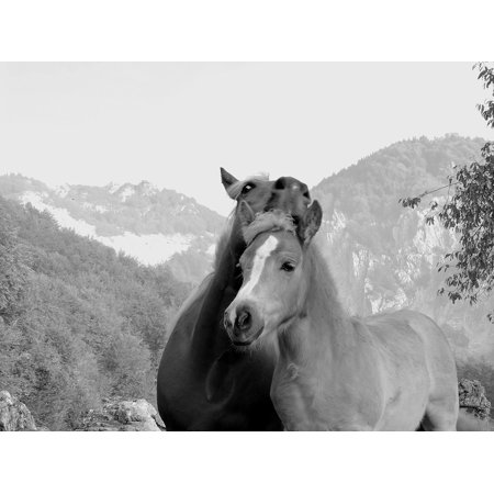 LAMINATED POSTER Tenderness Affection Love Foal Son Horse Mom Poster Print 24 x (Tenderness Metal)