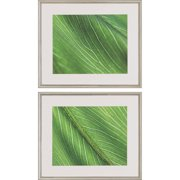 Paragon Palm Detail I by Lee 2 Piece Framed Photographic Print