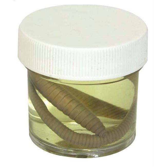 Olympia Sports 13700 Earth Worms - 7 in. - 9 in. - Pail of 10