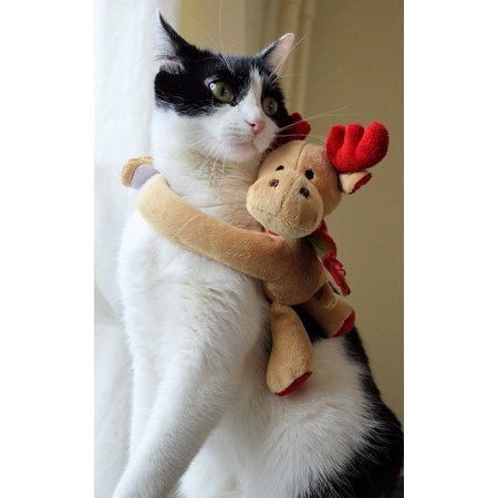 Canvas Print Kitten Ecard Cat Pet Deer Christmas Stretched Canvas 10 x - Halloween Ecards With Photo
