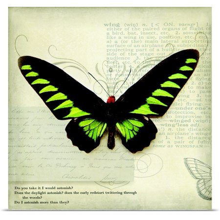 Great Big Canvas Amy Melious Poster Print Entitled Butterflies Script Vi