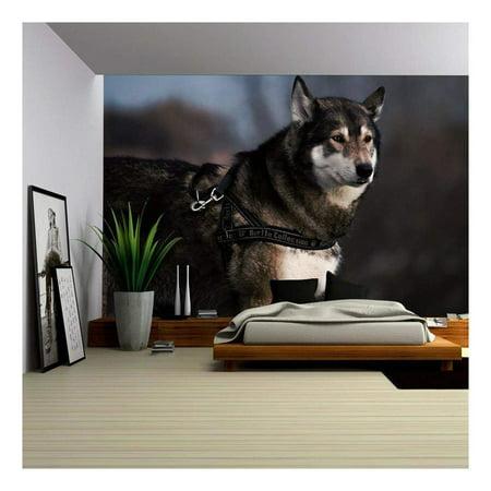 wall26 Portrait Swedish Elkhound Dog Removable Wall Mural Self Adhesiv