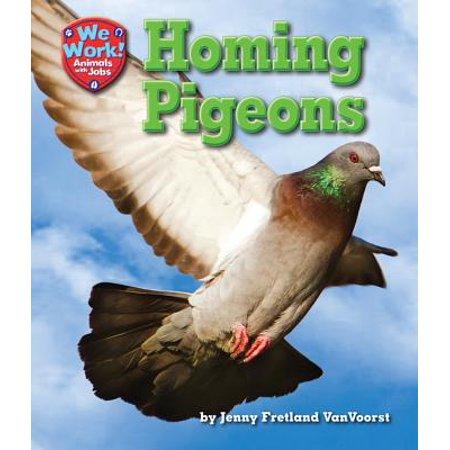 Pigeons Animal (Homing Pigeons)