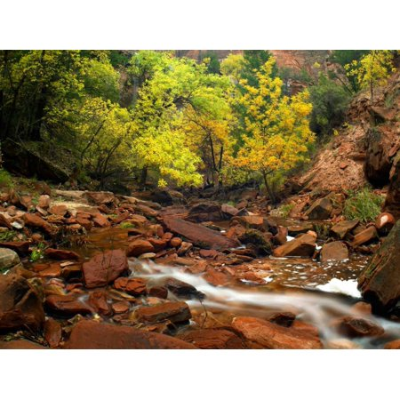 Zion Canyon near Emerald Pools Zion National Park Utah Poster Print by Tim