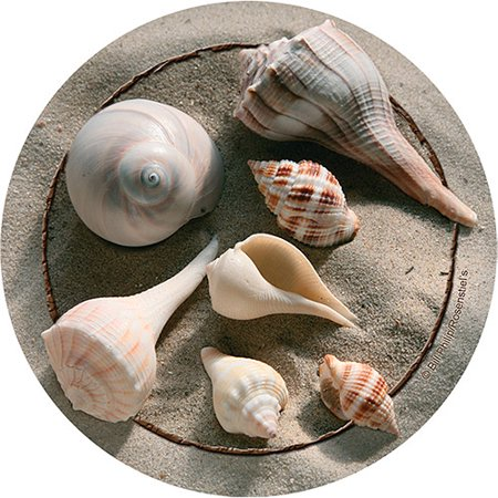 Thirstystone Occasions Drink Coasters, Shells