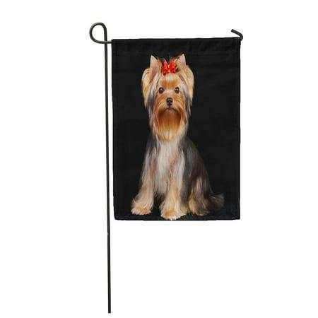 KDAGR Brown Dog Yorkshire Terrier The Red Yorkie Adorable Adore Garden Flag Decorative Flag House Banner 12x18 - Adorable Garden