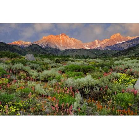 Landscape Lighting Gallery (California, Sierra Nevada Mountains. Wildflowers Bloom in Valley Landscape Photo Print Wall Art By Jaynes Gallery )
