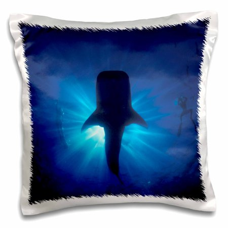 Rainbow Reef Shark - 3dRose Australia, Ningaloo Reef. Whale shark, snokelers-AU02 SWE0001 - Stuart Westmorland - Pillow Case, 16 by 16-inch
