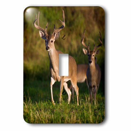 3dRose White-tailed Deer male with velvet antlers in habitat, Texas, USA, Single Toggle Switch