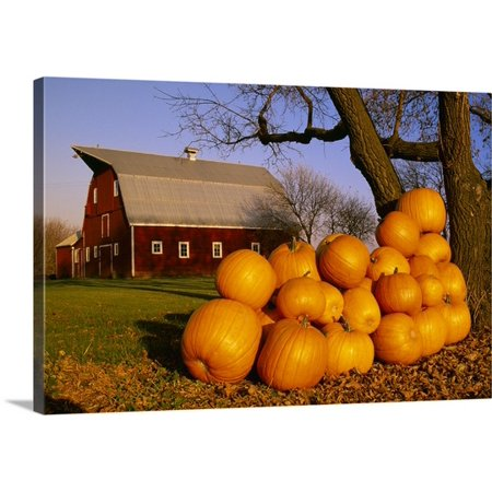 Great BIG Canvas Dave Reede Premium Thick-Wrap Canvas entitled Pumpkins piled up after the Autumn harvest near a red barn, near (A Great Big Pile Of Leaves Merch)