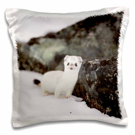 3dRose Short-tailed weasel wildlife, Brooks Range, Alaska, USA - US02 HRO0741 - Hugh Rose - Pillow Case, 16 by