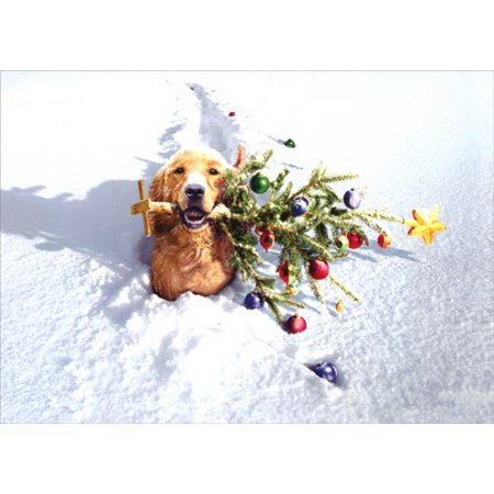 Avanti Press Dog With Tree In Snow Box of 10 Funny Christmas Cards