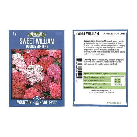 Sweet William Flower Garden Seeds - Double Mixture - 1 g Packet - Annual & Perennial Mix - Flower Gardening Seed