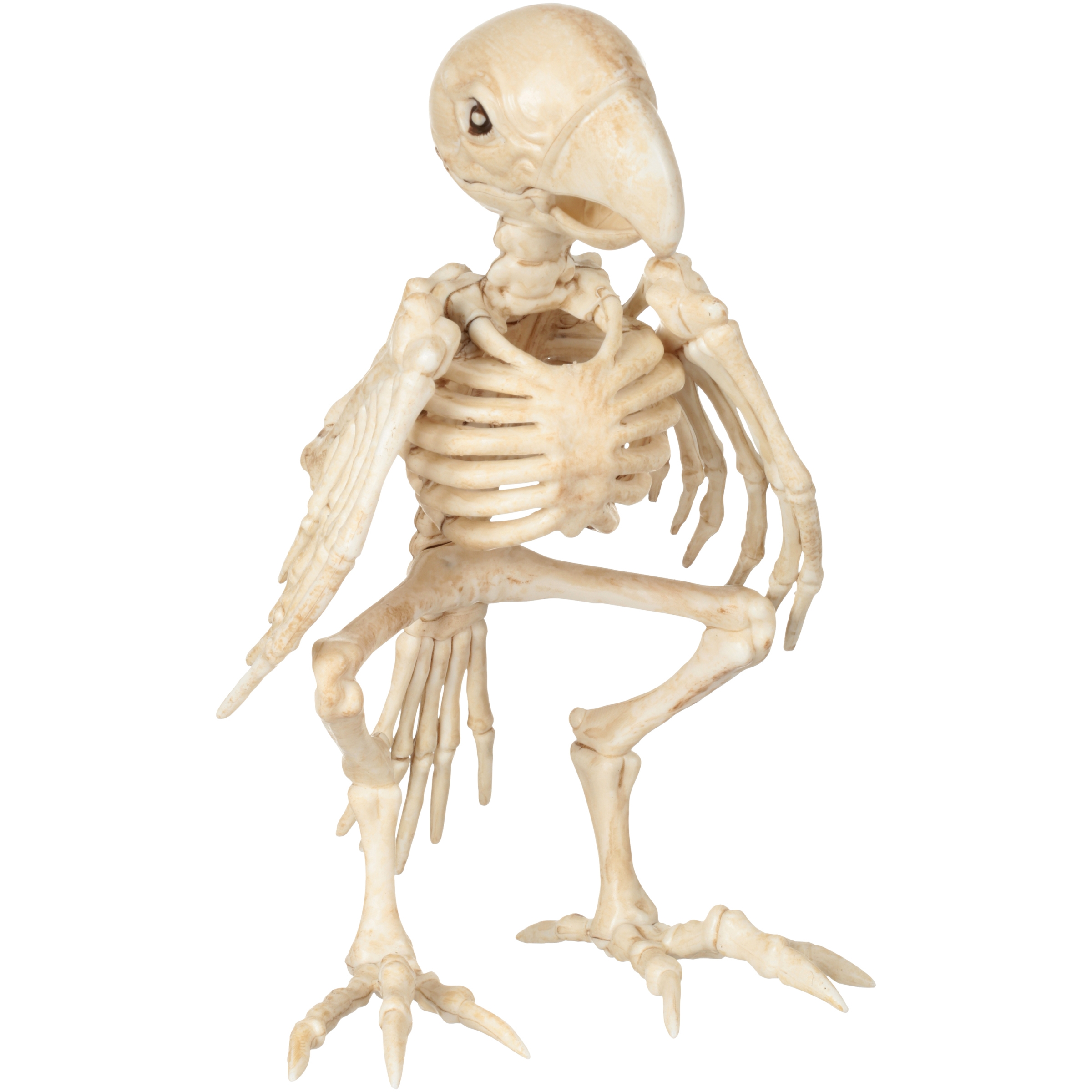 Official Crazybonez Faux Parrot Skeleton
