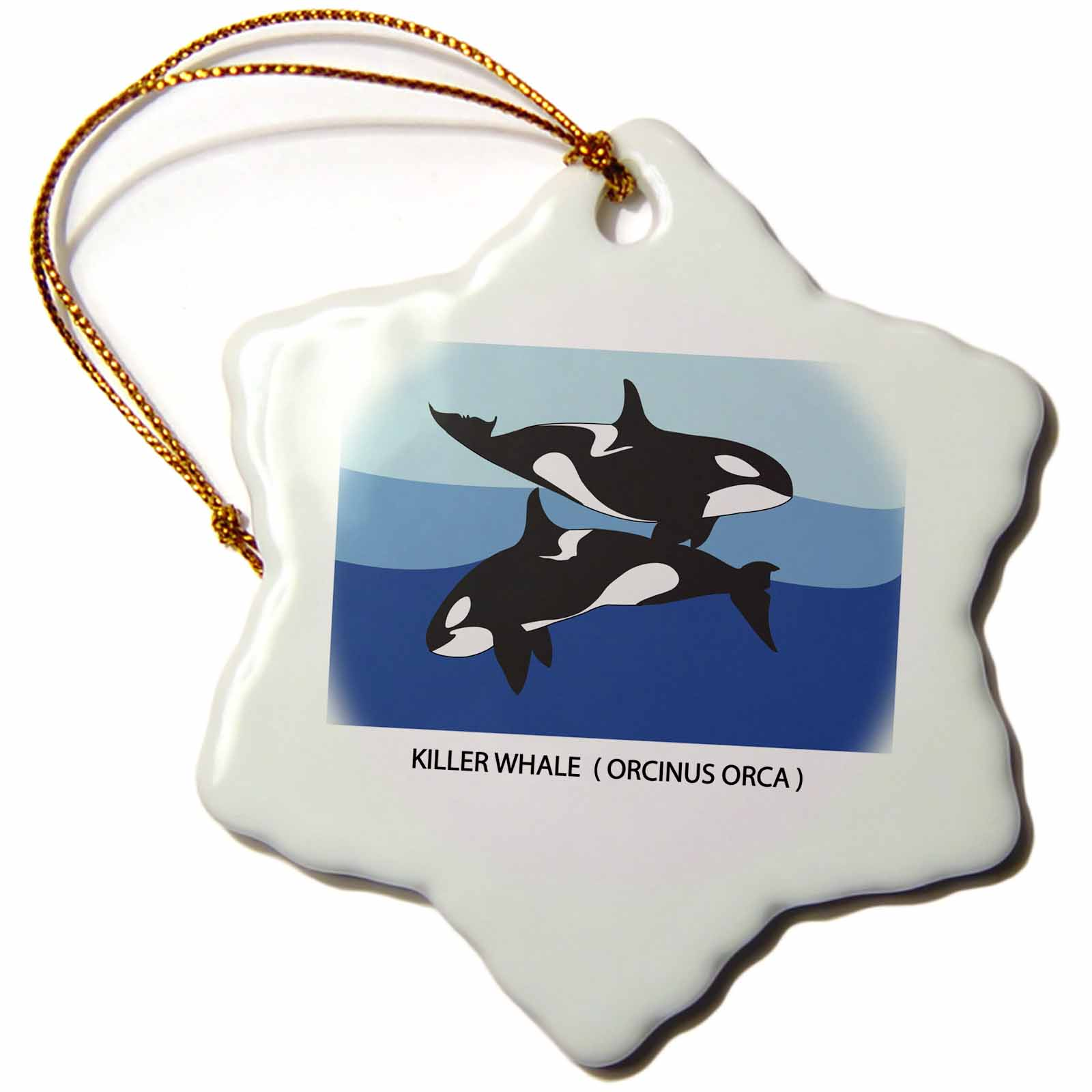 3dRose Two Killer Whales ( Orcinus Orca ) with caption, Snowflake Ornament, Porcelain, 3-inch