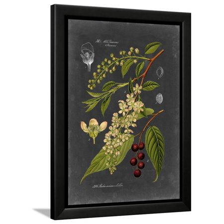 Midnight Botanical II Framed Print Wall Art By Vision Studio