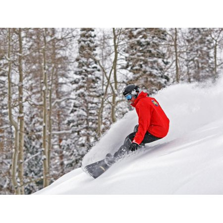 Snowboarder Enjoying Deep Fresh Powder at Brighton Ski Resort Print Wall Art By Paul